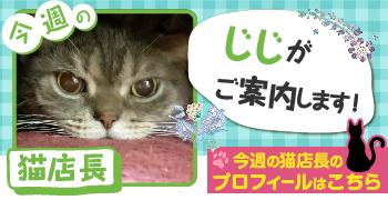 猫店長_じじ