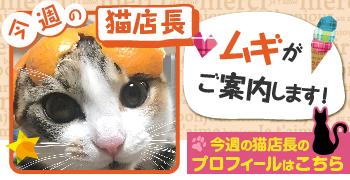 猫店長_ムギ
