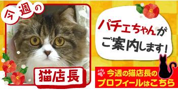 猫店長_パチェちゃん