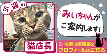 猫店長_みぃちゃん