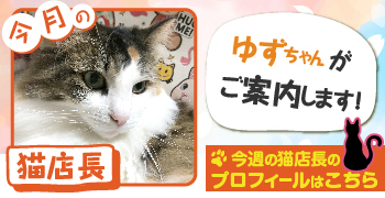 猫店長_ゆずちゃん