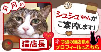 猫店長_シュシュちゃん