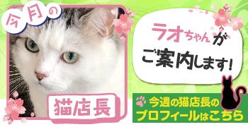 猫店長_ラオちゃん