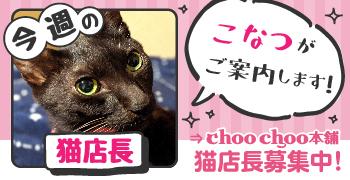 猫店長_no1こなつ